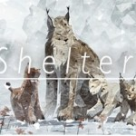 ShelterTitle